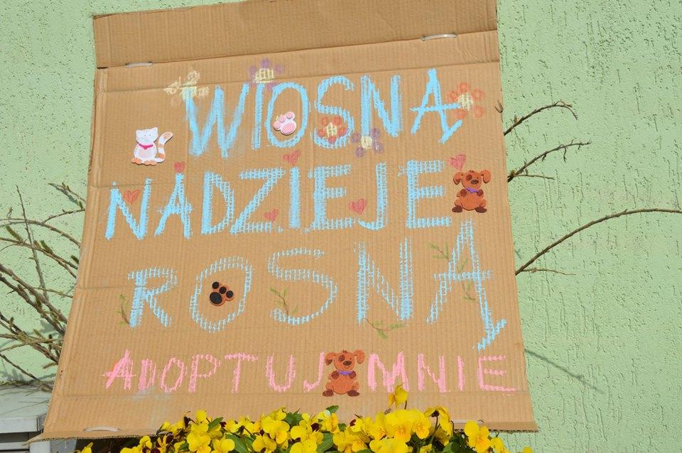 Wiosna_nadzieje_rosna_51
