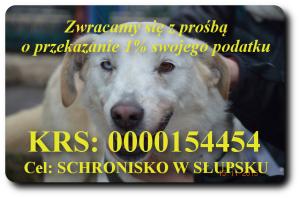 1 % na schronisko dla bezdomnych zwierząt w Słupsku